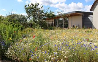 Wildlife Garden at Hengistbury