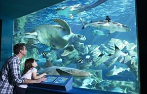 Oceanarium, The Bournemouth Aquarium