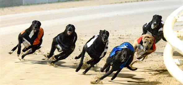 Poole Stadium Greyhounds Racing