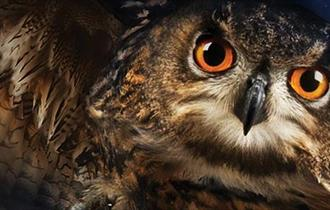 A swooping Hogwarts' Owl looks into the camera