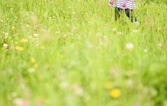 Toddler playing in wildflower field with wildlife hand net.