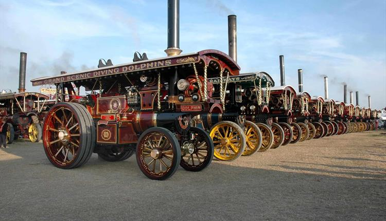 Steam engines all lined up at the Great Dorset Steam Fair