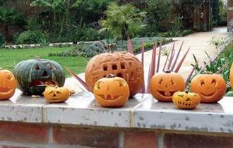 Tray of carved pumpkins on display.