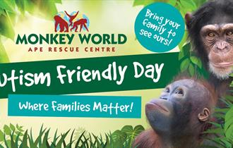 Advert for Autism Day at Monkey World, showing infant orangutan Mimi