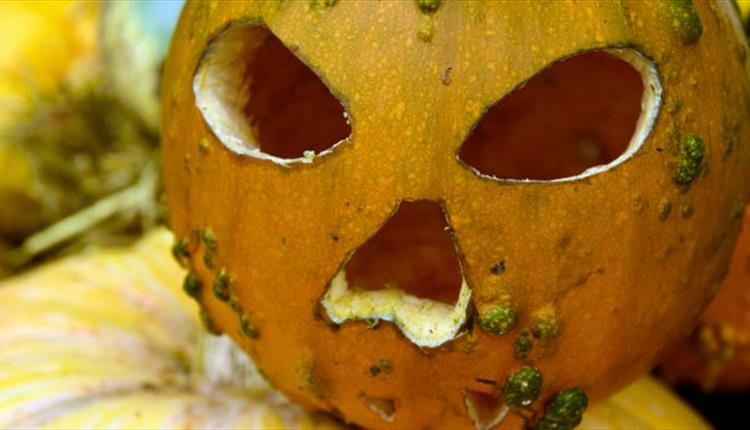 pumpkin madness at NT Brownsea Island this Halloween.